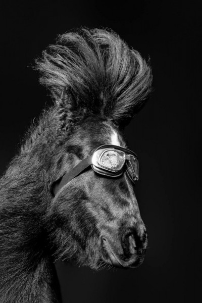 "Emanuele Scorcelletti ""Brushing 3, Penelope Equus"", Vautoudan's Equestrian Farm, Januar 2017"