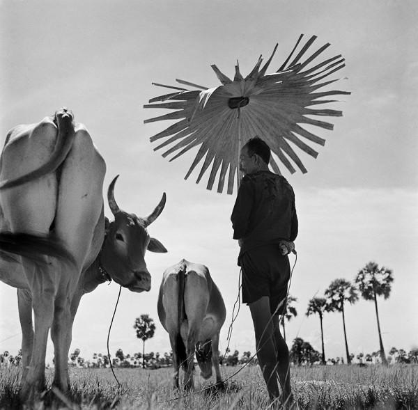 """Werner Bischof """"Bauer Kambodscha"""", 1952"""