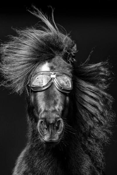 "Emanuele Scorcelletti ""Brushing 4, Penelope, Equus"", Vautoudan's Equestrian Farm, Januar 2017"