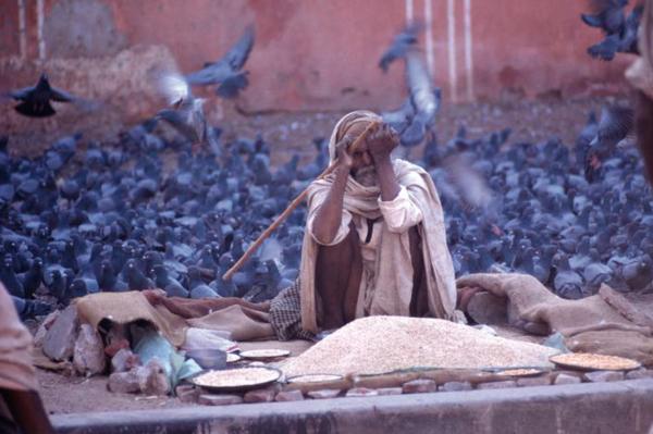 """Michael Friedel """"Taubenfütterung"""", Jaipur, Rajastan, Indien, 1969"""