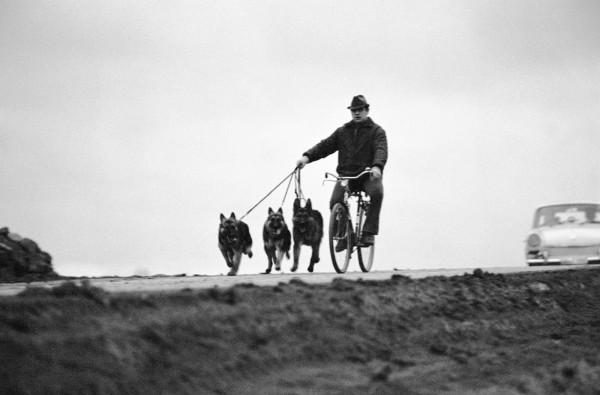 Régis Bossu ''German shepherd power'', 1971