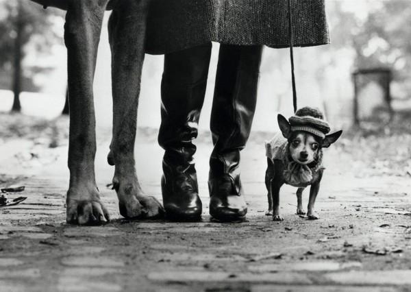"Postkarte ""Elliott Erwitt - Felix, Gladys and Rover, 1974"""